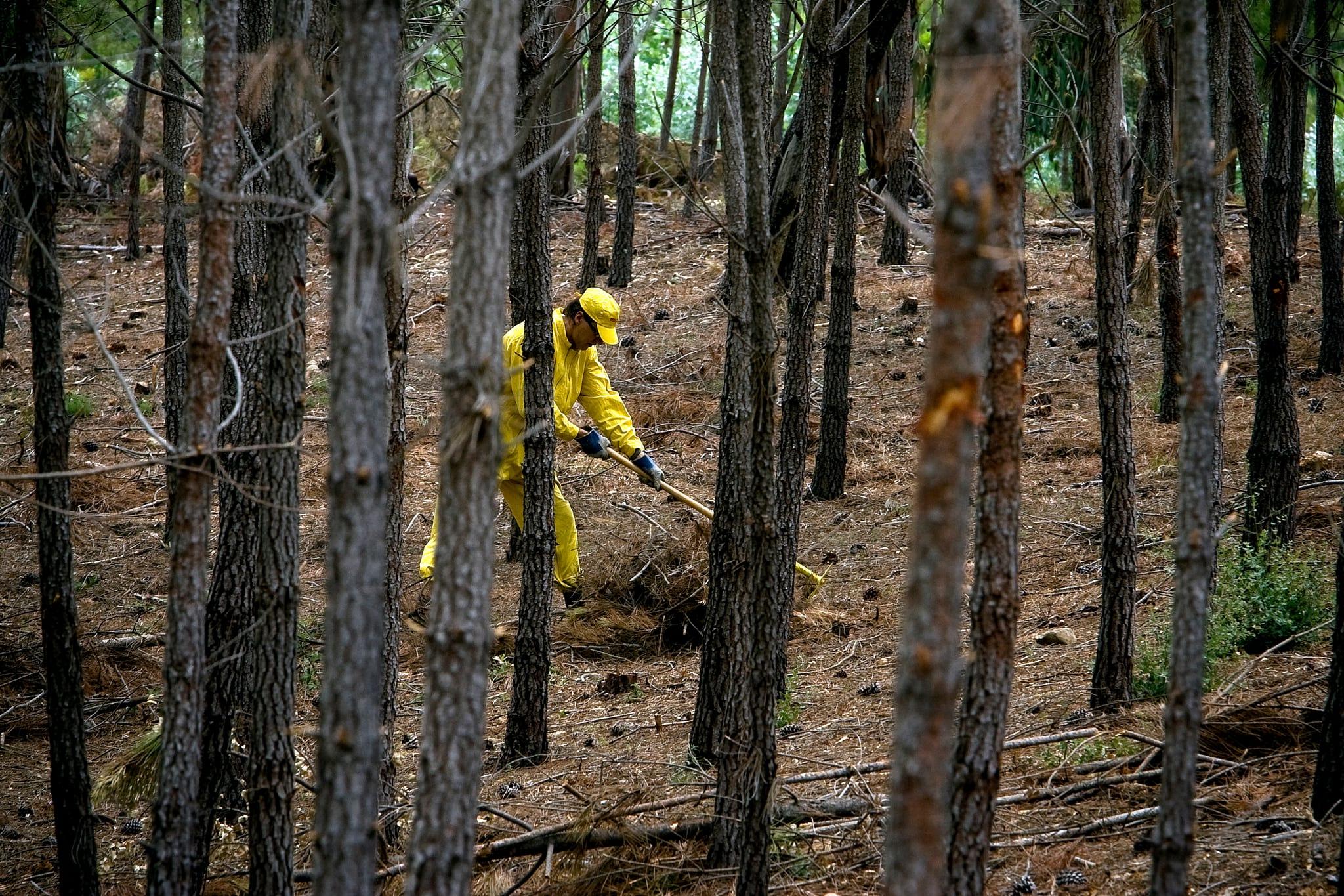 Só uma pequena parte das Zonas de Intervenção Florestal consegue gerir as áreas que tem a seu cargo