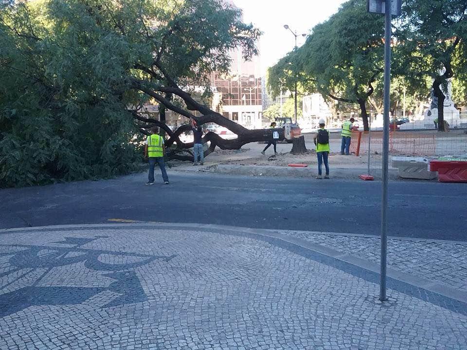 PÚBLICO - Obras no Saldanha deitam árvores abaixo apesar das promessas em contrário