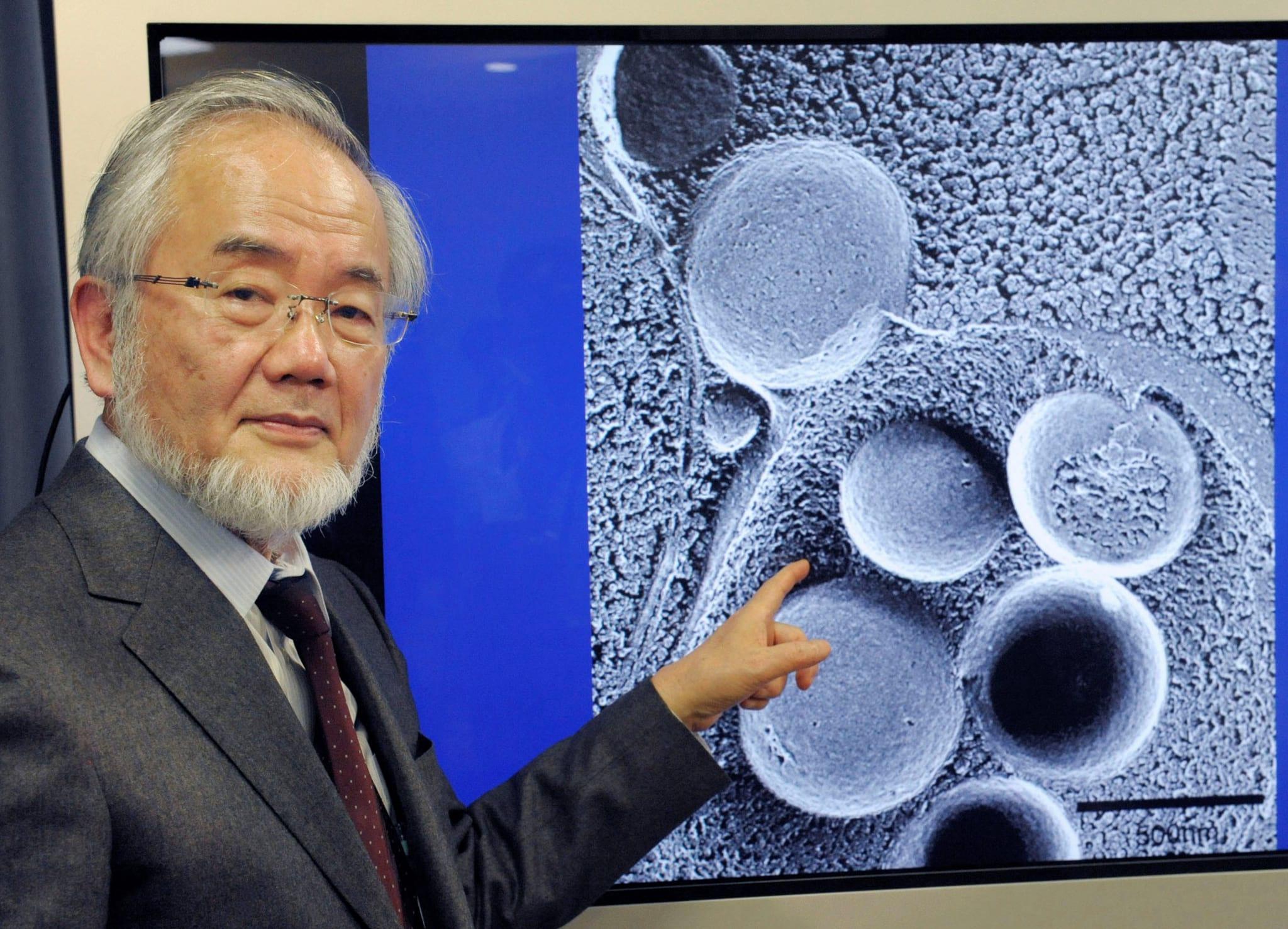 Yoshinori Ohsumi - Nobel de Medicina em 2016 - Benefícios do Jejum