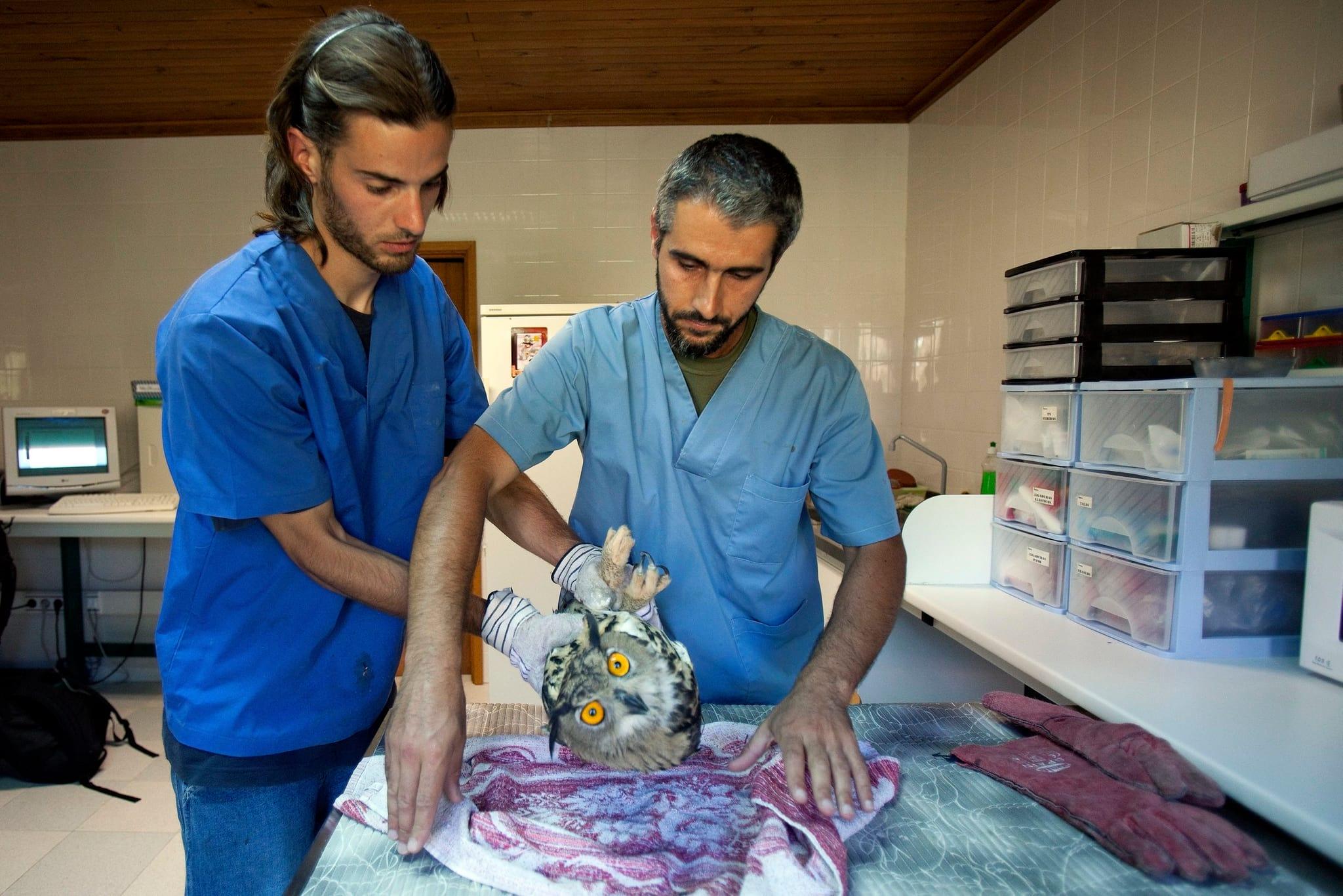 Veterinários estão a ser formados para o desemprego, diz bastonário