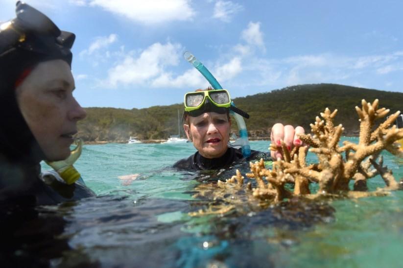 Uma grande parte dos corais da zona Sul conseguiram escapar com danos mínimos, verificaram os mergulhadores
