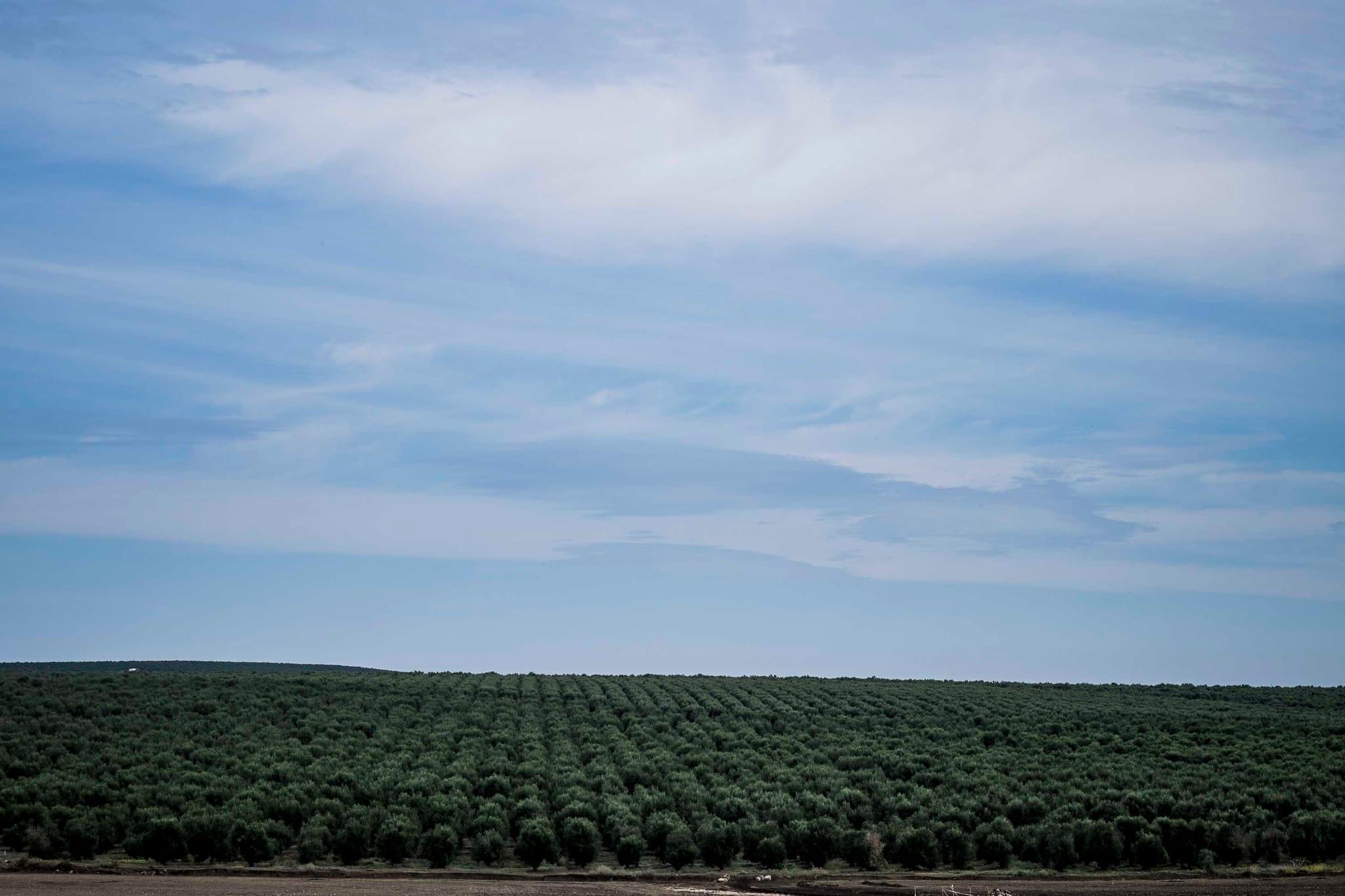 O glifosato é o ingrediente activo da fómula de alguns herbicidas