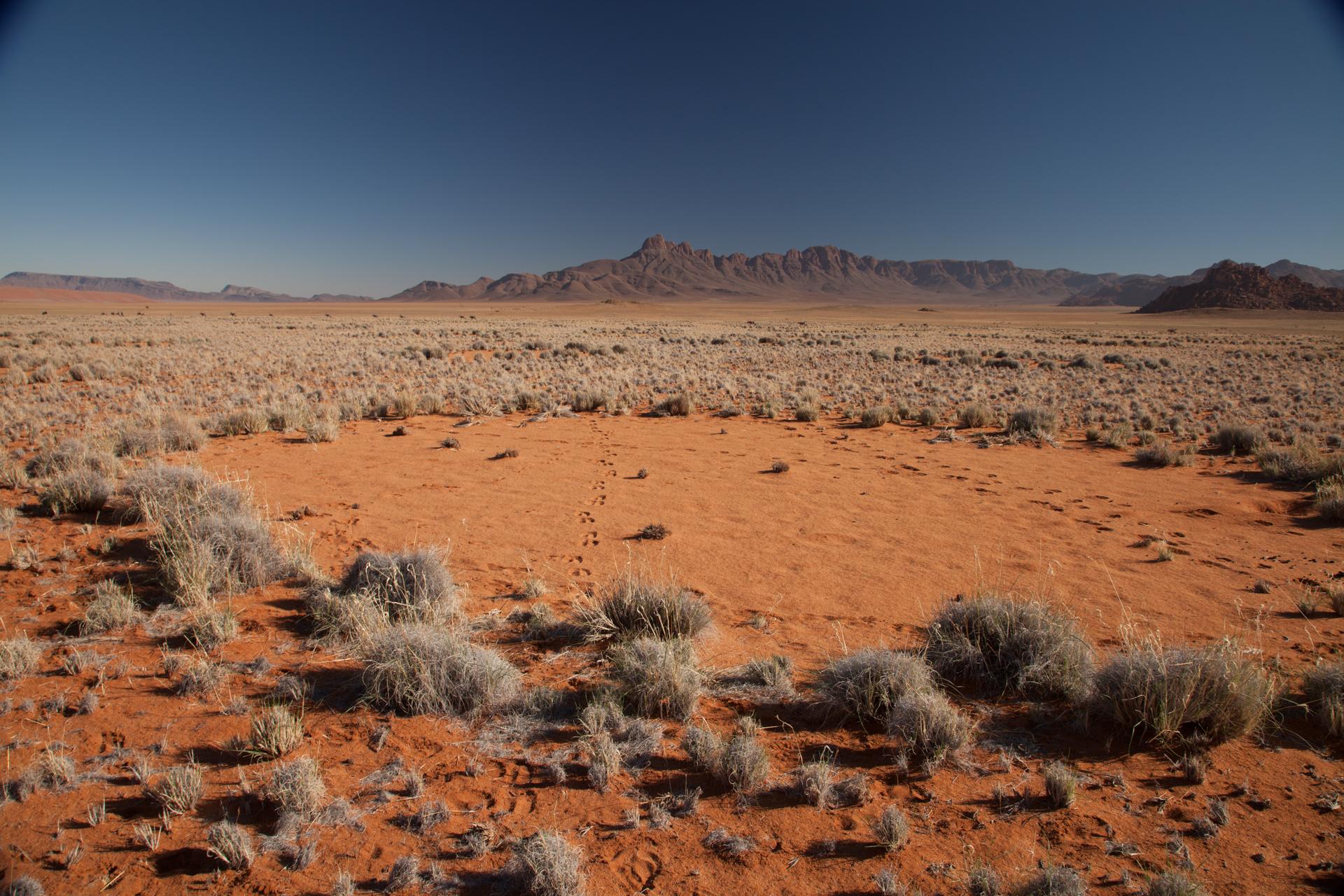 PÚBLICO - Se não são as fadas que fazem círculos de vegetação no deserto do Namibe, quem é?