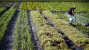 Genética: Os primeiros agricultores chegaram à Península Ibérica pelo mar