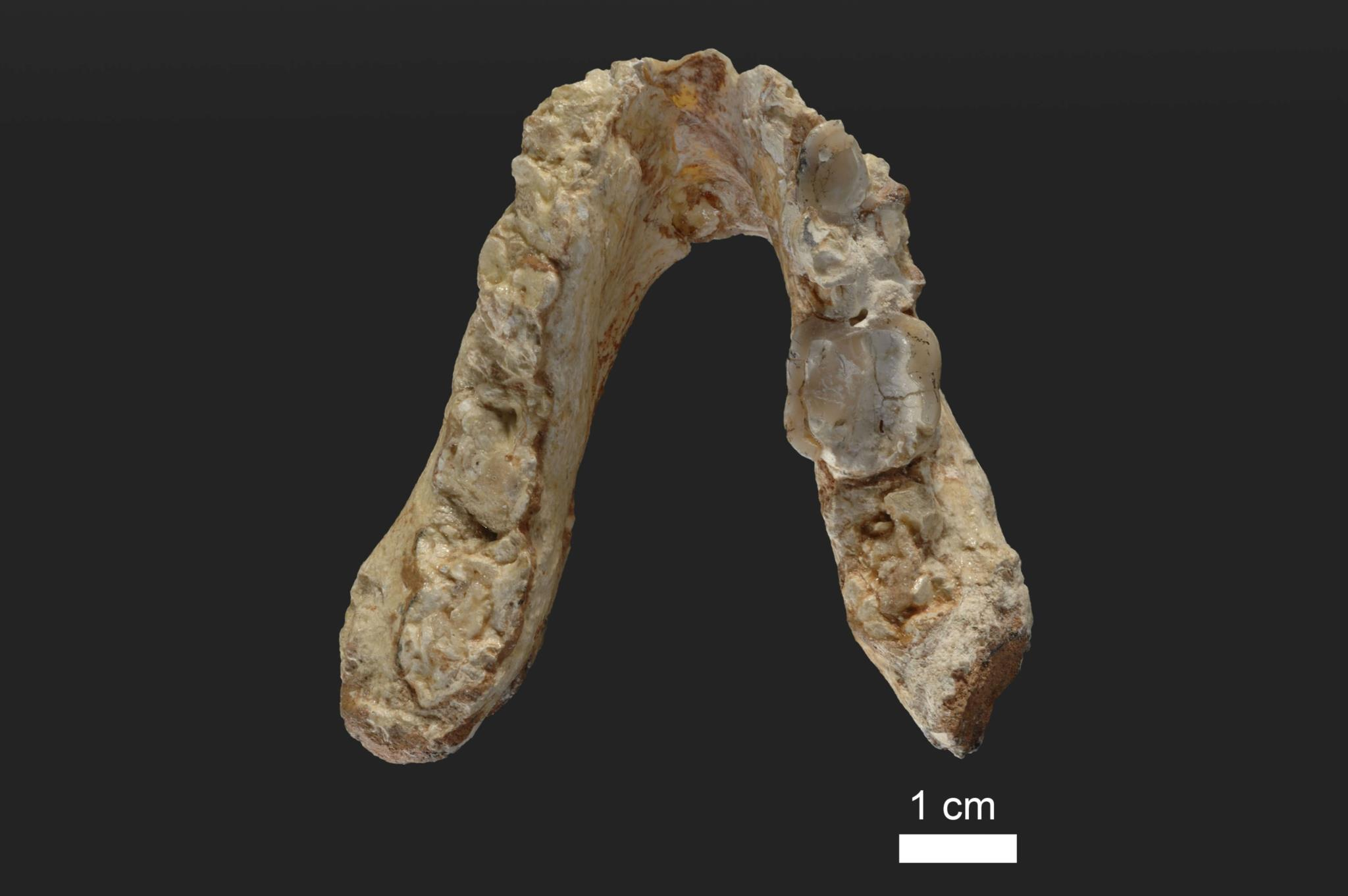 PÚBLICO - Dois fósseis vieram lançar dúvidas sobre origem da linhagem humana em África