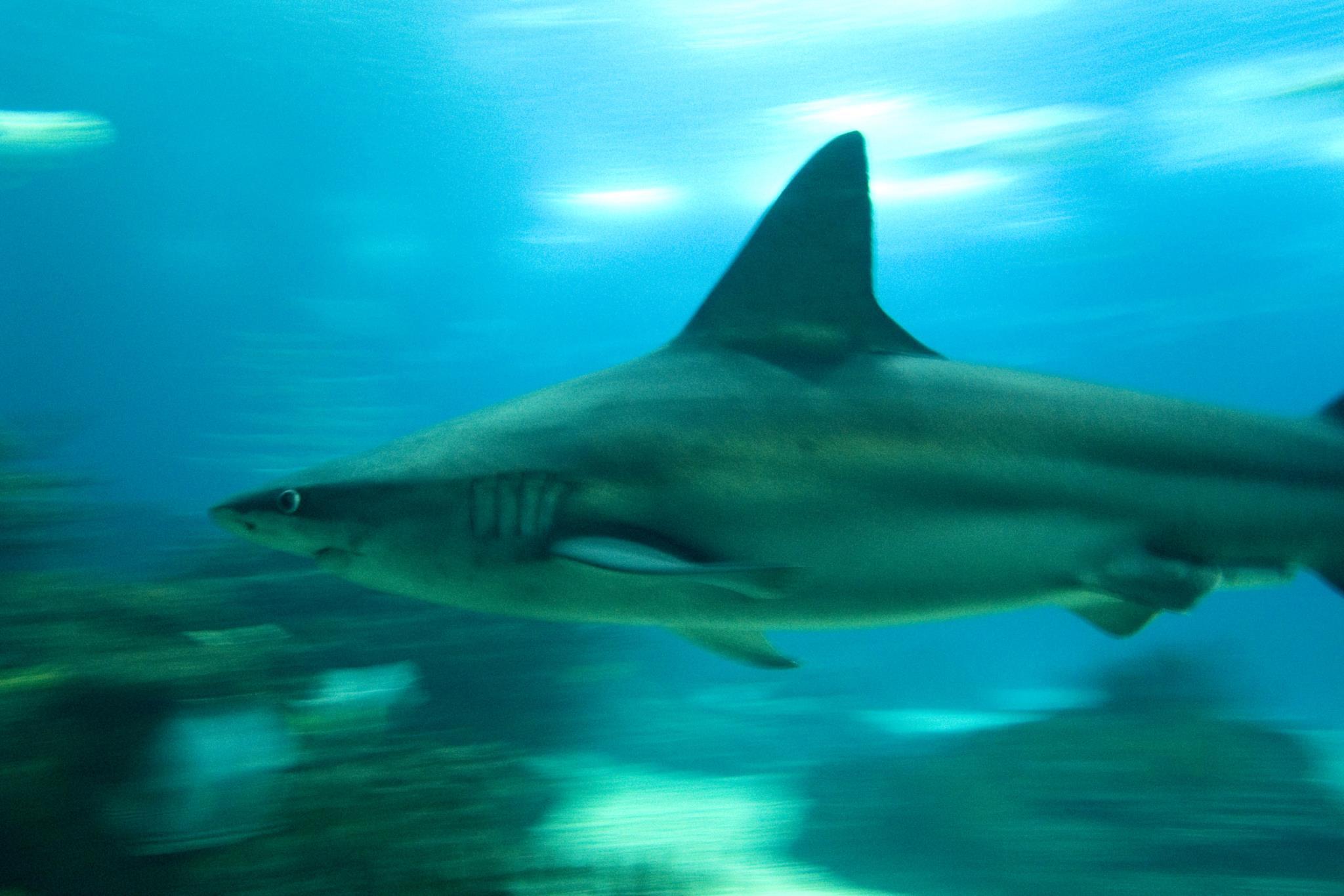"""PÚBLICO - Tubarão saltou para um barco na Austrália. Pescador diz que é algo """"mundano"""""""