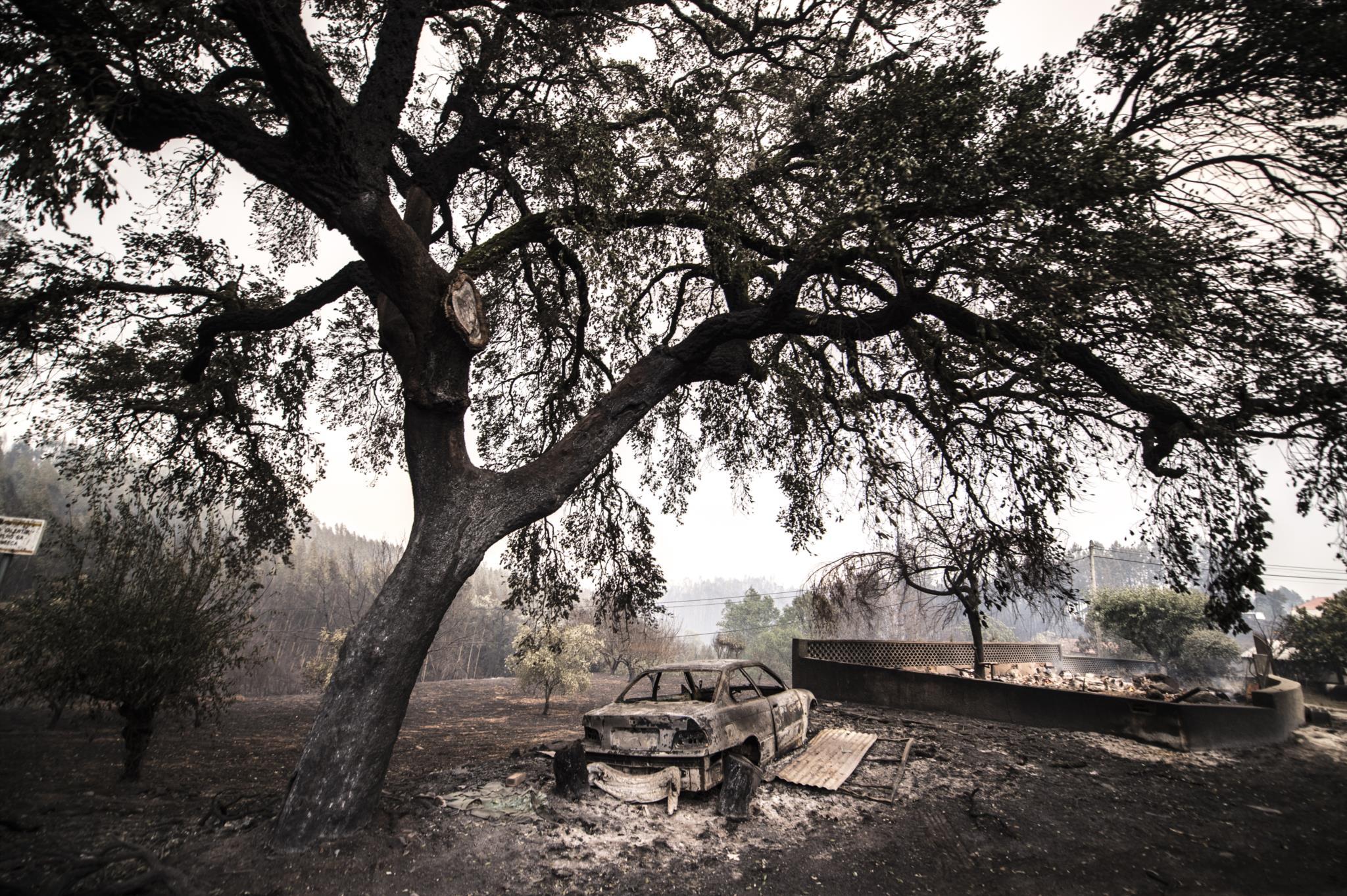 PÚBLICO - Centenas de animais terão morrido no incêndio de Pedrógão Grande