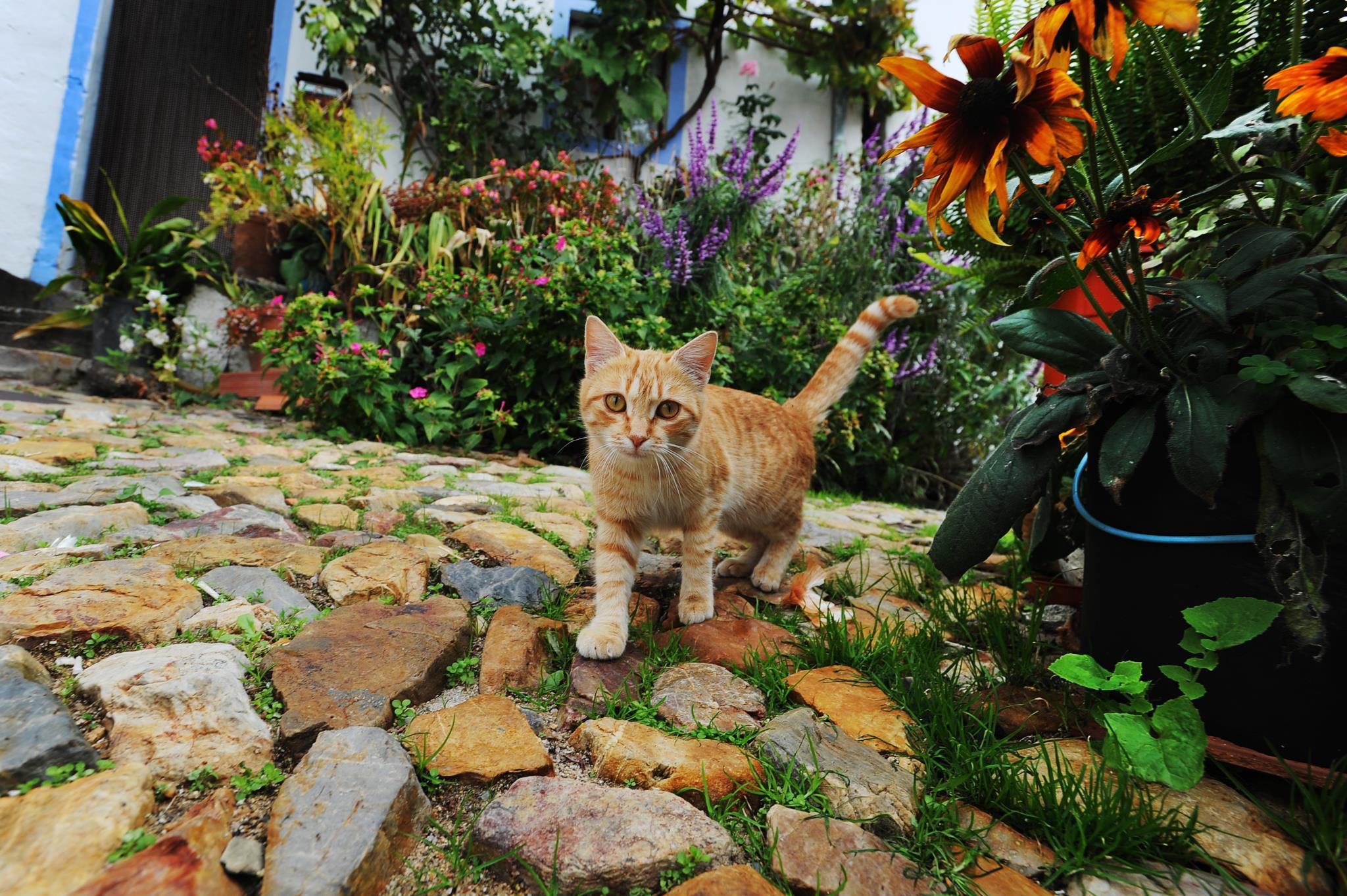 PÚBLICO - Como os gatos conquistaram o mundo e foram domesticados