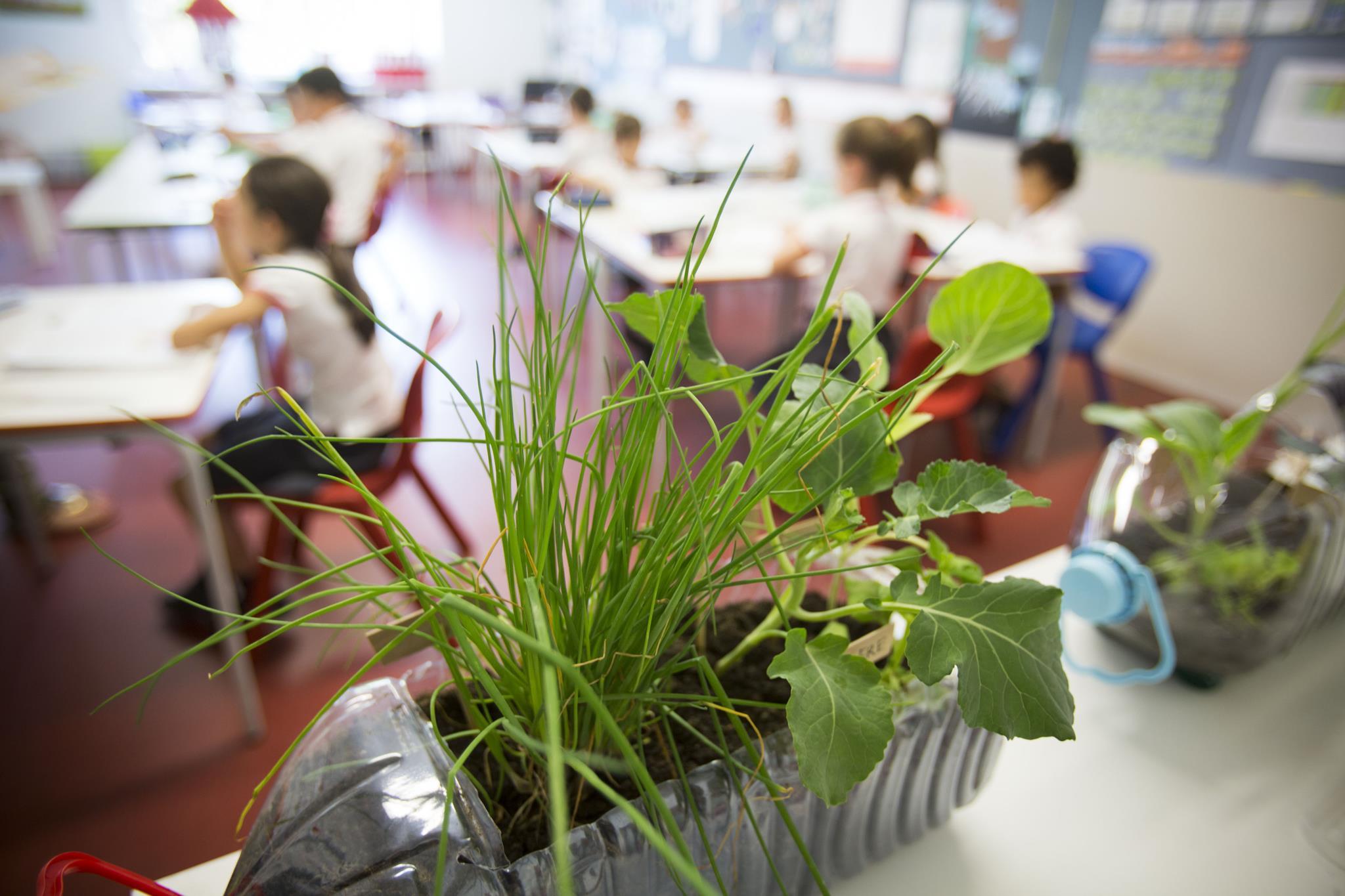 PÚBLICO - Escola plantou hortas em todas as salas para erradicar a fome