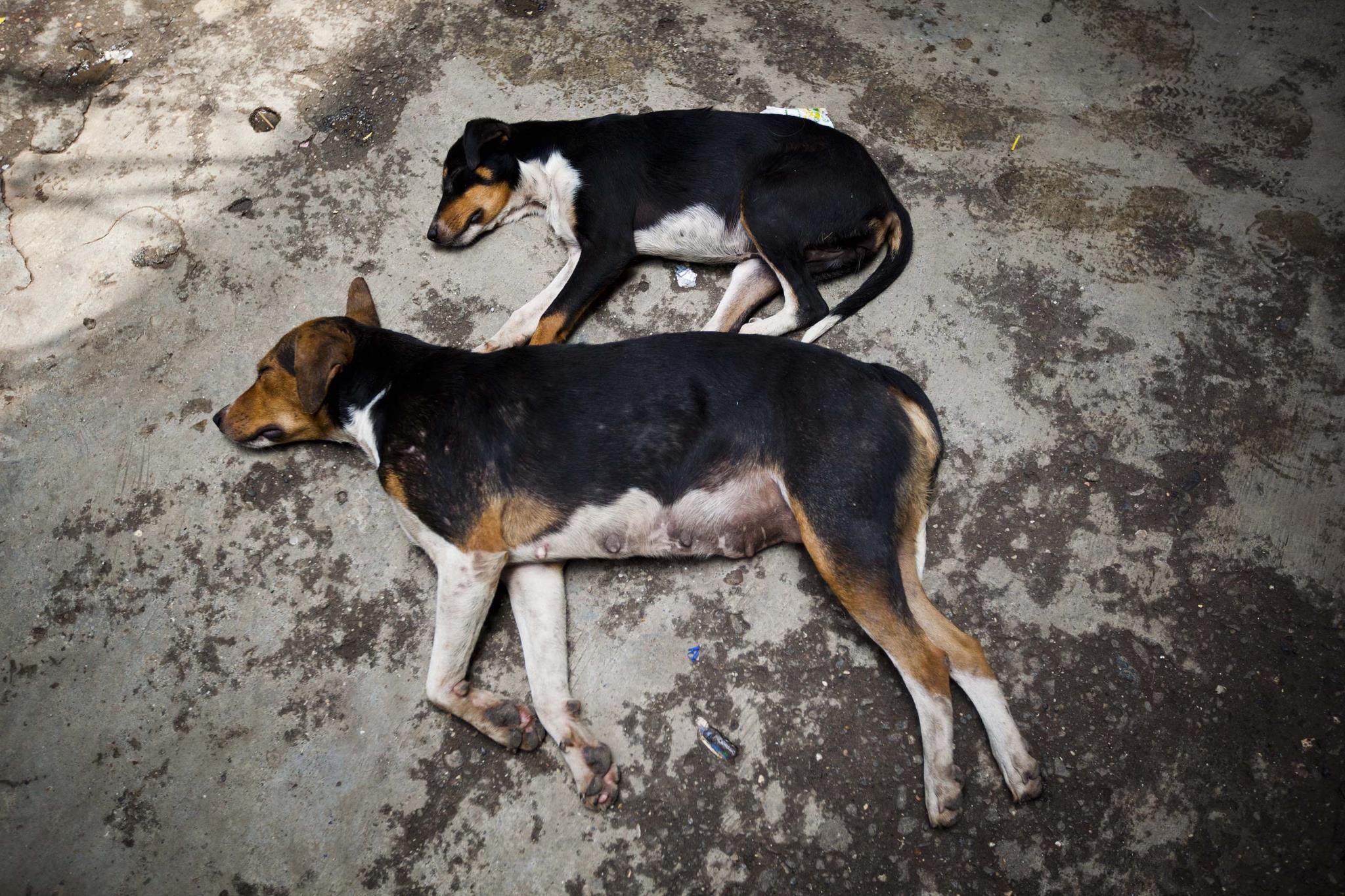 PÚBLICO - Queixas sobre falta de civismo dos donos de animais aumentam em Matosinhos
