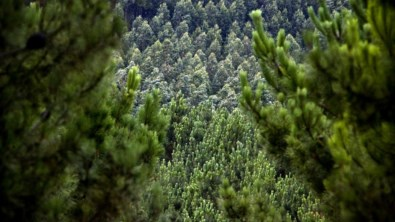 Floresta, o sonho português a arder