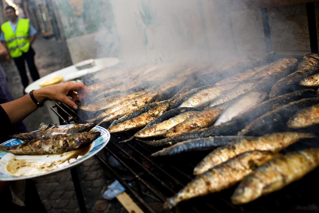 PÚBLICO - Cientistas aconselham Portugal a travar pesca de sardinha imediatamente
