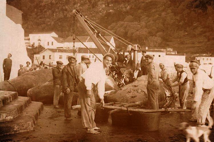 """PÚBLICO - """"Era o mar, era a terra e era a baleia"""""""