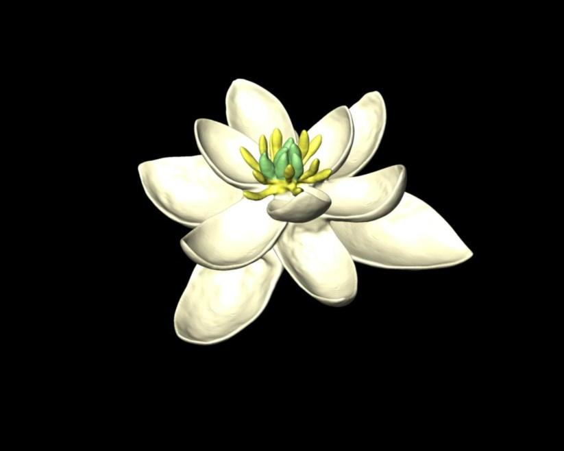 Modelo tridimensional da primeira flor do planeta