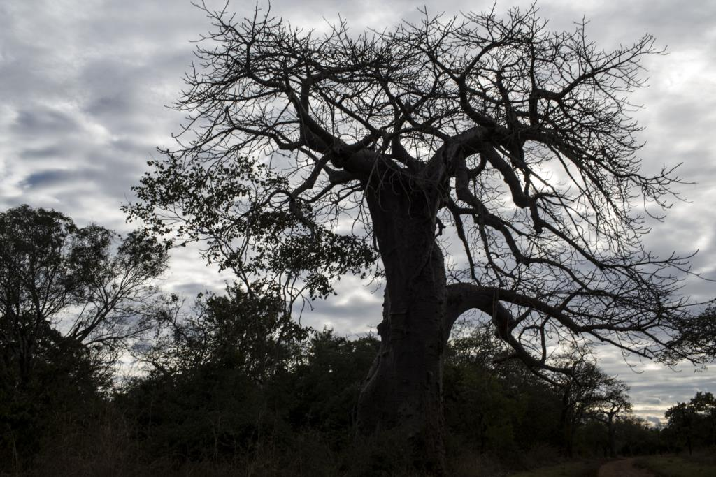 Achebe retoma as regras canónicas do romance e acrescenta-lhe a estética da tradição oral africana