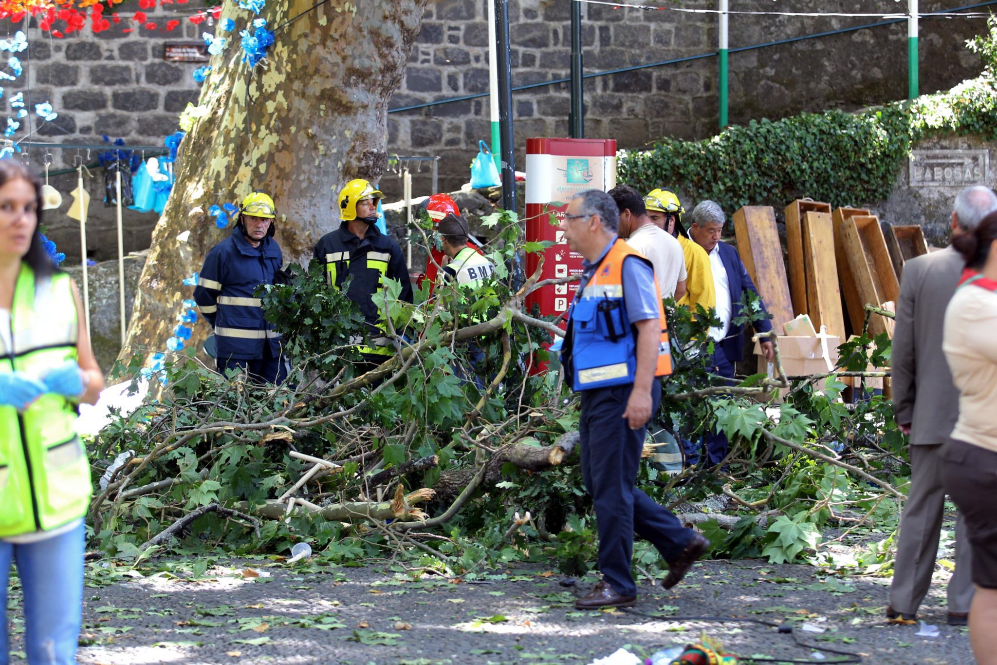 As primeiras imagens da queda da árvore na Madeira