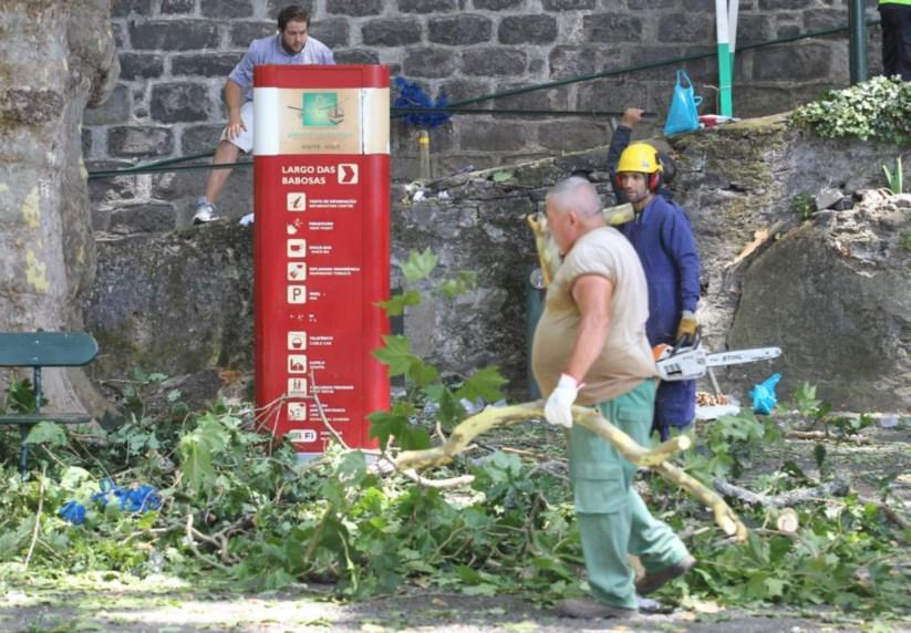 Junta de Freguesia avisara já em 2014 para o risco das árvores centenárias 1154122?tp=UH&db=IMAGENS&w=823