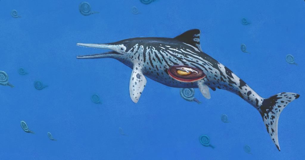 Ilustração do espécime agora estudado