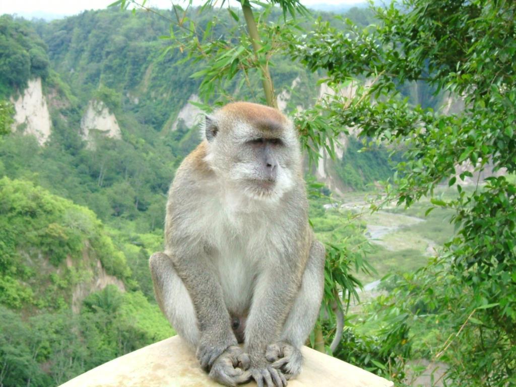 Células estaminais repararam neurónios em macacos com doença de Parkinson