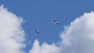 Um dos drones da Zipline em acção no Ruanda