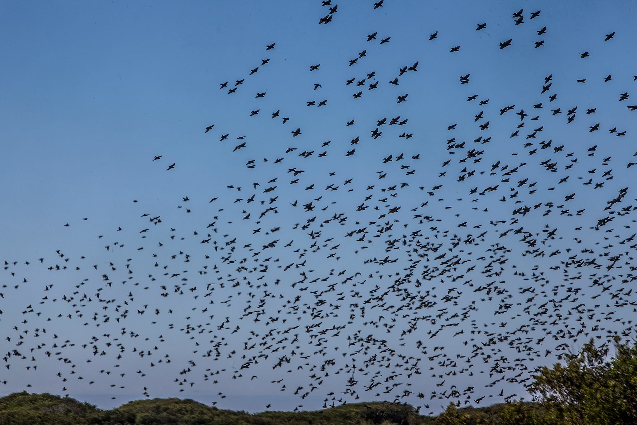 PÚBLICO - Deixe os binóculos por perto. É tempo de observar para onde migram as aves