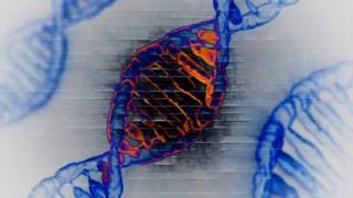O ADN tem quatro letras apenas, A, T, G, C que se unem em pares sempre iguais