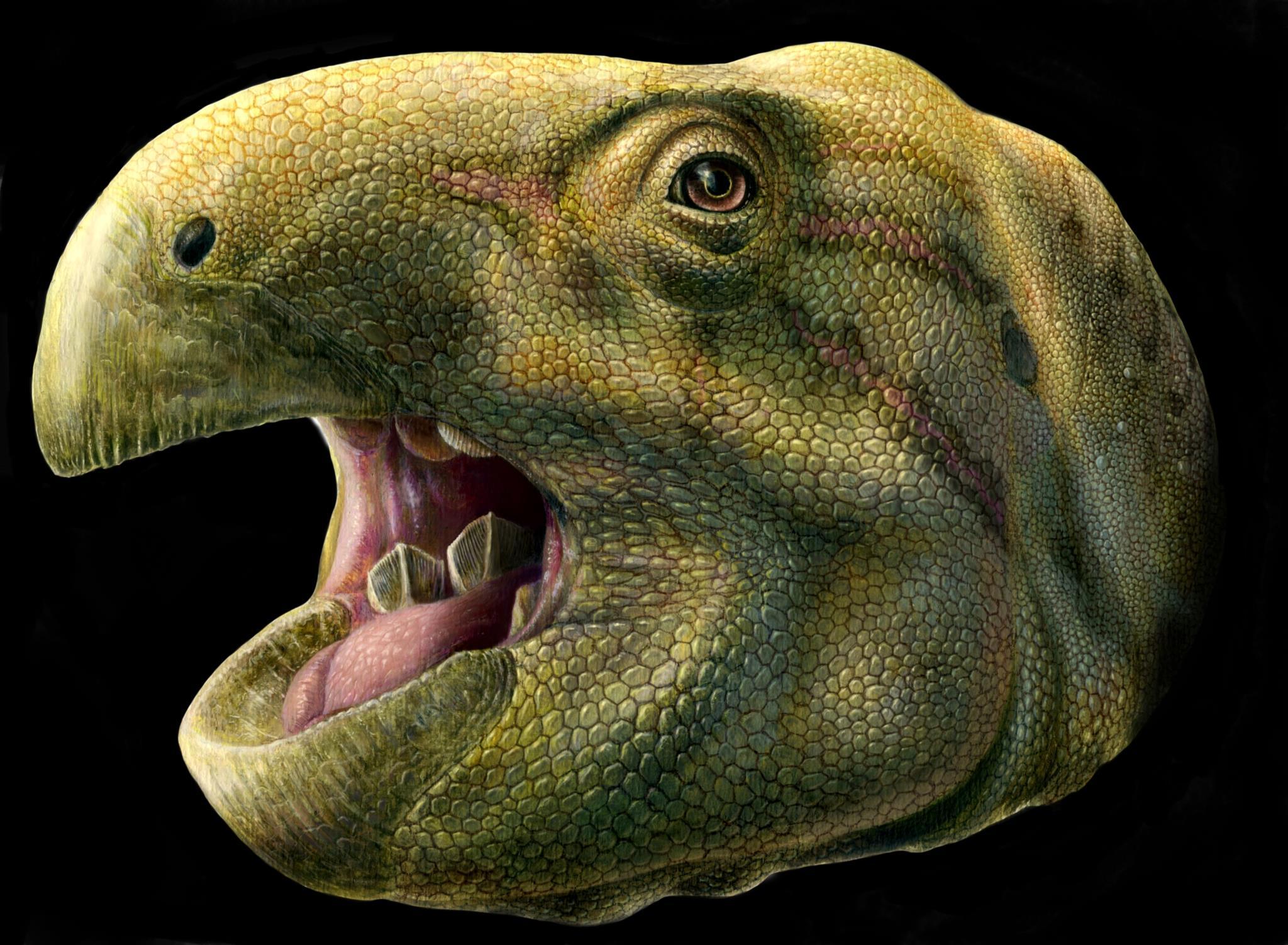 Ilustração científica do <i>Matheronodon provincialis</i>