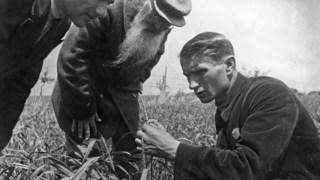 Trofim Lysenko a analisar o crescimento do trigo no campo de uma cooperativa agrícola colectiva perto de Odessa, na Ucrânia, nos anos 30
