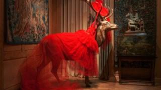 Um veado empalhado e um manto, um vestido de tule vermelho repleto de folhos:  um dos momentos visualmente mais espectaculares da exposição de Sophie Calle