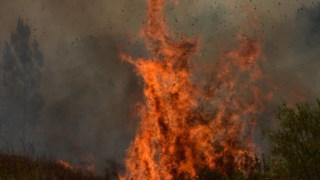 """Depois dos """"três grandes incêndios"""" deste Verão, o município de Miranda do Douro tinha pedido uma intervenção """"urgente"""" na área protegida"""