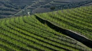 Alto Douro Vinhateiro, calssificado pela UNESCO, estende-se por vários concelhos