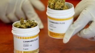 Cannabis para efeitos medicinais é legal em Roterdão, Holanda