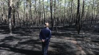 Os dois incêndios de Outobro de 2017 devastaram 86% do Pinhal de Leiria