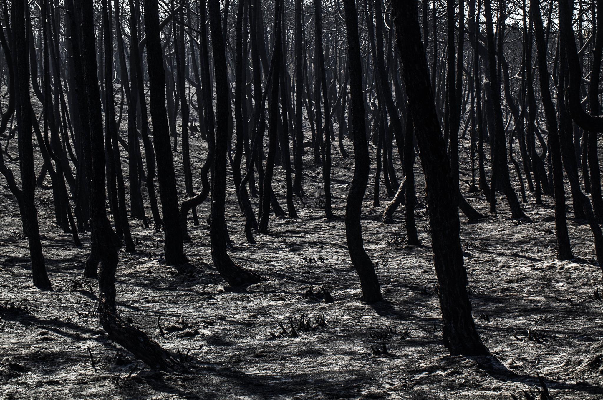 Resultado de imagem para Incêndios: Homem confessou ter ateado fogo no pior dia do ano em Oliveira de Azeméis
