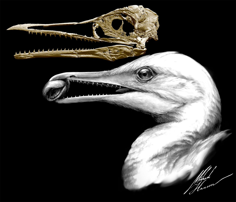 Resultado de imagem para Como é que as aves primitivas ganharam os seus bicos