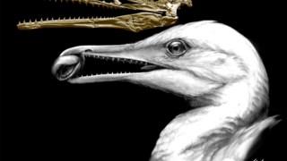 Crânio e ilustração da ave da espécie <i>Ichthyornis dispar</i>