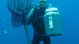 Os peixes são capturados de forma sustentável na costa do Continente e ao largo da ilha do Faial DR