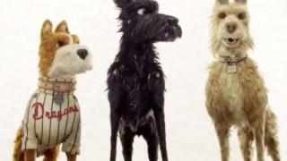 Cachorro, pare o movimento
