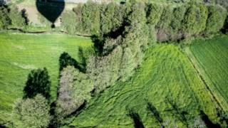 Arbusto, Reserva natural, Vegetação, Bioma