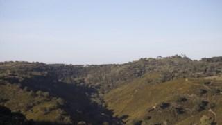 Arbusto, Estepe