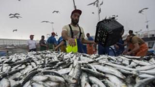 A pesca da sardinha continua limitada até ao final de Julho