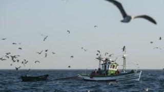 Shore, aves marinhas, oceano