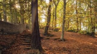 Floresta temperada de folhas largas e mistas