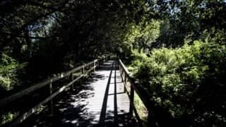 Bosque, Vegetação