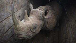 Rinoceronte, tsavo, leste, nacional, parque, pretas, rinoceronte