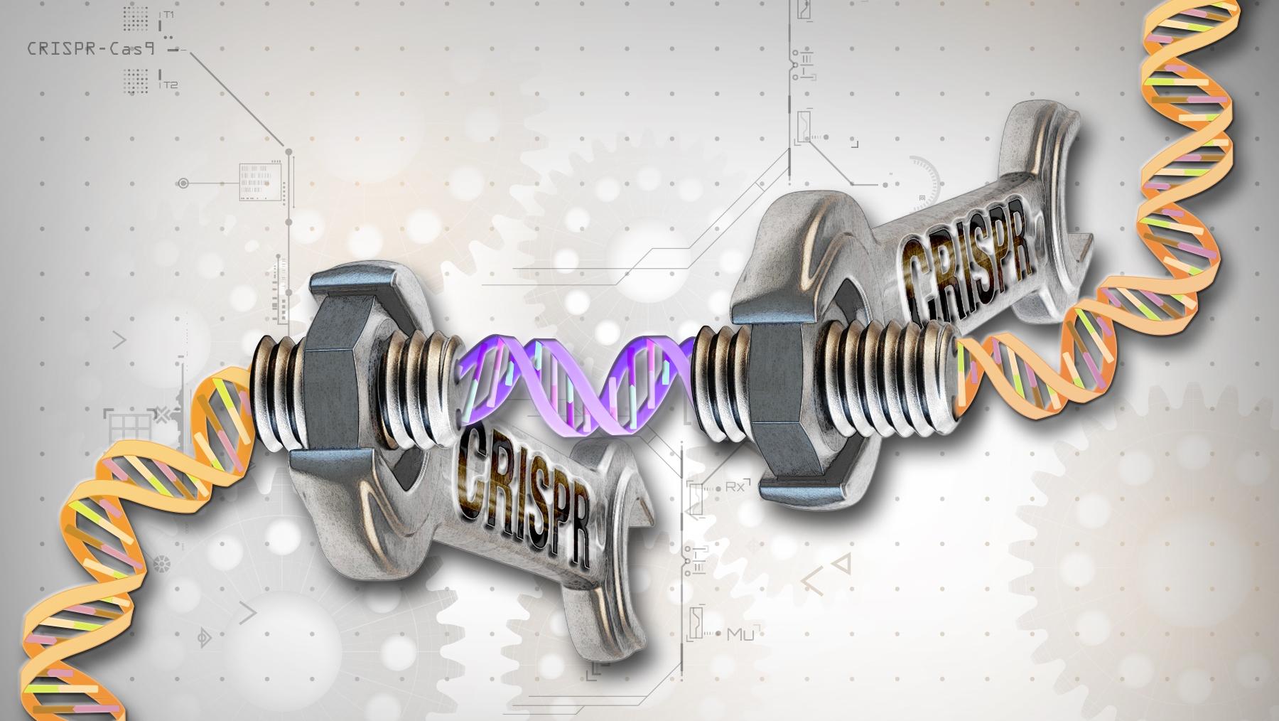 Técnica de edição genética CRISPR pode causar danos perigosos no ADN