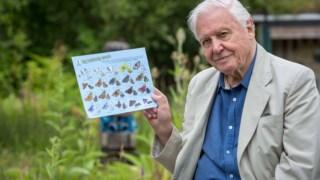 David Attenborough, borboleta, contagem de borboletas