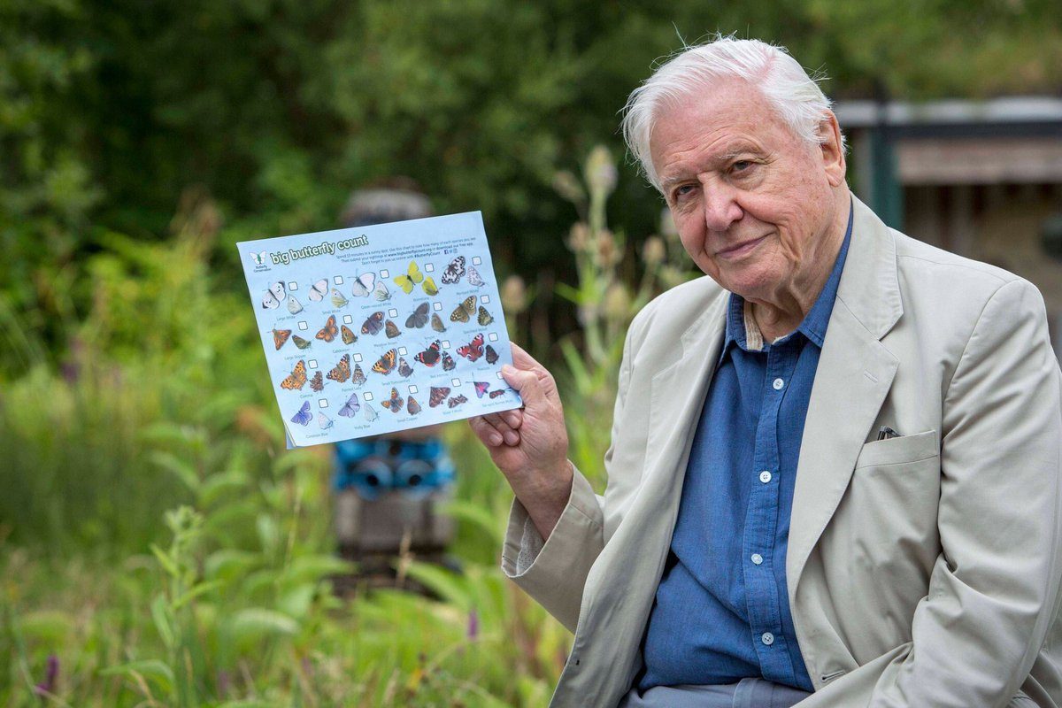 O britânico David Attenborough incentiva a participação no Big Butterfly Count