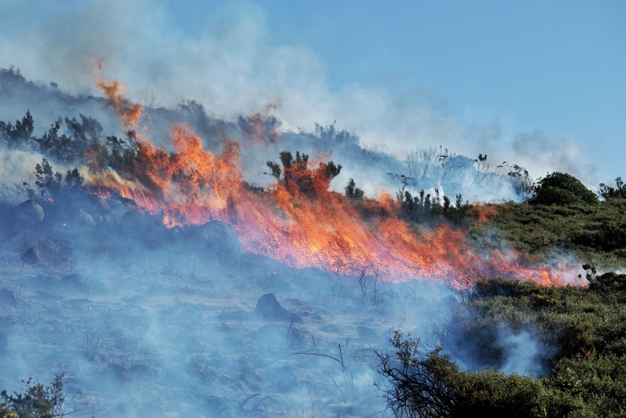 Combater alterações climáticas e incêndios? A gestão florestal é o caminho