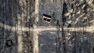 Mação teve a maior área ardida nos incêndios do ano passado